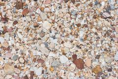 Overzeese shells en rots op zand Stock Afbeeldingen