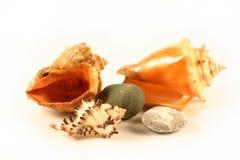 Overzeese shells en stenen stock fotografie
