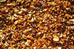 Overzeese shells en stenen royalty-vrije stock fotografie