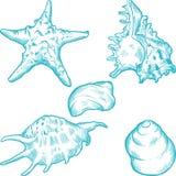 Overzeese shells en ster Hand getrokken illustratie Stock Afbeelding