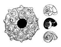 Overzeese shells en zeeëgelshell op witte achtergrond vector illustratie