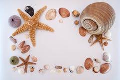 Overzeese shells en zeester royalty-vrije stock foto's