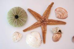 Overzeese shells en zeester royalty-vrije stock fotografie