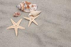 Overzeese shells en zeester op het zand Royalty-vrije Stock Foto's