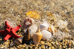Overzeese shells en zeester op zonnig strand Stock Fotografie