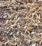 Overzeese Shells Galore Royalty-vrije Stock Afbeelding