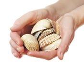 Overzeese shells in handen Royalty-vrije Stock Fotografie