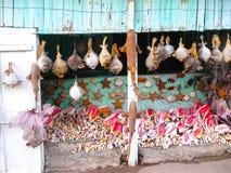 Overzeese shells herinneringen ergens in Dominicaanse Republiek Royalty-vrije Stock Afbeelding
