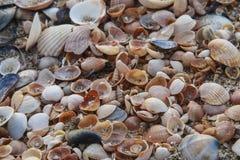 Overzeese shells Kuststrand Stock Foto