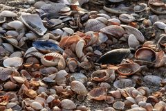 Overzeese shells Kuststrand Royalty-vrije Stock Foto