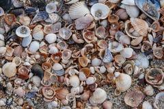 Overzeese shells Kuststrand Royalty-vrije Stock Foto's