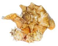 Overzeese shells macro Stock Foto's