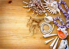 Overzeese shells met halsband als achtergrond Royalty-vrije Stock Afbeeldingen