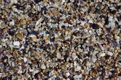Overzeese shells met kiezelstenen als achtergrond Royalty-vrije Stock Afbeelding