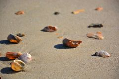 Overzeese shells met zand royalty-vrije stock fotografie