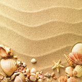 Overzeese shells met zand Royalty-vrije Stock Foto's