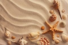 Overzeese shells met zand Stock Foto