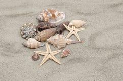Overzeese shells met zand Stock Afbeeldingen