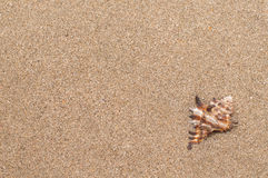 Overzeese shells met zand als achtergrond Royalty-vrije Stock Foto
