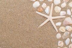 Overzeese shells met zand als achtergrond Royalty-vrije Stock Foto's