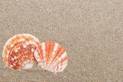 Overzeese shells met zand als achtergrond Stock Foto