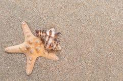 Overzeese shells met zand als achtergrond Stock Foto's
