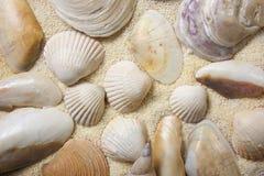 Overzeese shells met zand als achtergrond Royalty-vrije Stock Fotografie