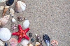 Overzeese shells met zandige achtergrond Royalty-vrije Stock Foto