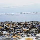 Overzeese shells op de kust stock afbeelding