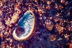 Overzeese shells op de kust Stock Afbeeldingen
