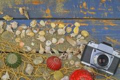 Overzeese Shells op een Blauwe Achtergrond De zomer reizende tijd Overzeese vakantieachtergrond met diverse shells en uitstekende Stock Fotografie