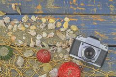 Overzeese Shells op een Blauwe Achtergrond De zomer reizende tijd Overzeese vakantieachtergrond met diverse shells en uitstekende Stock Afbeelding