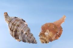 Overzeese shells op een lichtblauwe achtergrond. Stock Foto's