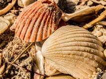 Overzeese shells op een strand royalty-vrije stock afbeelding