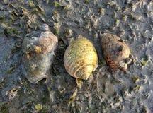 Overzeese shells op het overzeese grasbed Stock Afbeelding