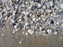 Overzeese shells op het strand Stock Foto