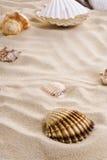 Overzeese shells op het strand Royalty-vrije Stock Afbeeldingen