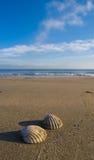 Overzeese shells op het strand Royalty-vrije Stock Afbeelding
