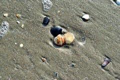 Overzeese shells op het strand Royalty-vrije Stock Fotografie
