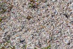 Overzeese Shells op het strand in Florida Royalty-vrije Stock Foto