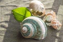 Overzeese shells op het zand Royalty-vrije Stock Afbeeldingen
