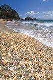 Overzeese shells op hoofdstrand, MT Maunganui, Baai van Overvloed, het Noordeneiland, Nieuw Zeeland Royalty-vrije Stock Afbeeldingen