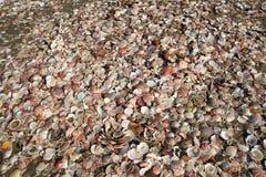 Overzeese Shells op Strand Royalty-vrije Stock Foto's