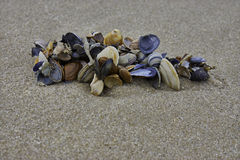 Overzeese shells op strand Stock Foto's