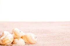 Overzeese shells op strandzand Stock Afbeeldingen