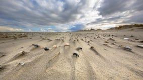 Overzeese shells op wind geveegd strand stock foto's