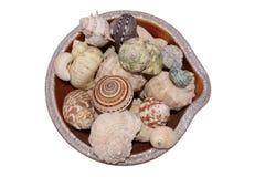 Overzeese shells op wit en geïsoleerde emmer - Royalty-vrije Stock Foto's