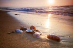 Overzeese shells op zand Royalty-vrije Stock Fotografie