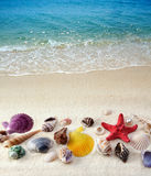 Overzeese shells op zand royalty-vrije stock foto's