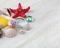 Overzeese shells op zand royalty-vrije stock afbeelding